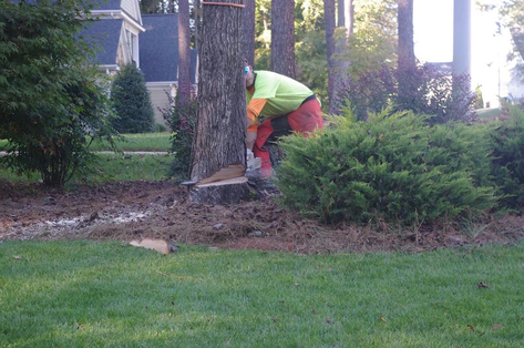 Lakeland Tree Removal Pricing