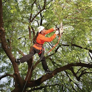 Tree Trimming Lakeland