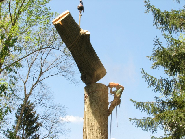 Tree trunk removal Lakeland