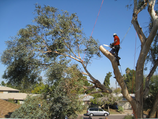 Tree Removal in Lakeland FL
