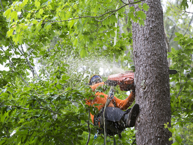 Tree Removal Service Lakeland